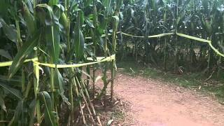 Uncle Shuck's Corn Maze 2011