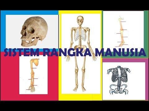 Ilustrasi Bedah Tulang Belakang.