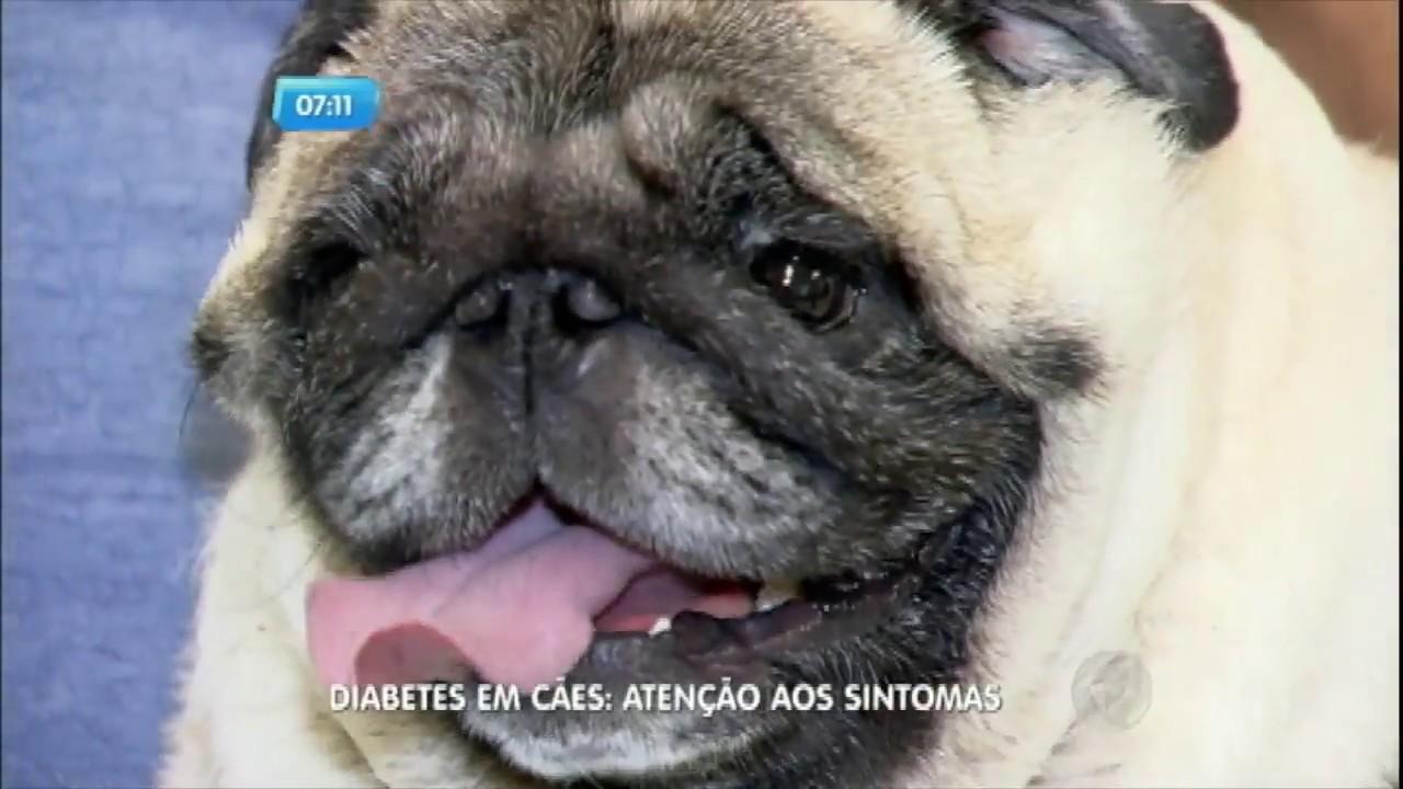 síntomas de diabetes en cachorros