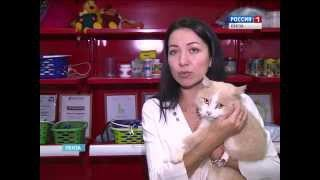 В Пензе отметили День домашних животных