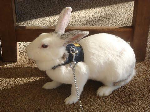 とてもかわいい!うさぎとハムスター♪so cute! Rabbit