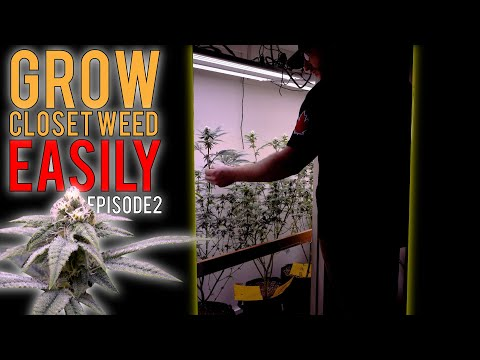 GROWING WEED EASILY IN MY CLOSET (PHOTOPERIODS) START TO FINISH ORGANIC GROW GUIDE   EPISODE2