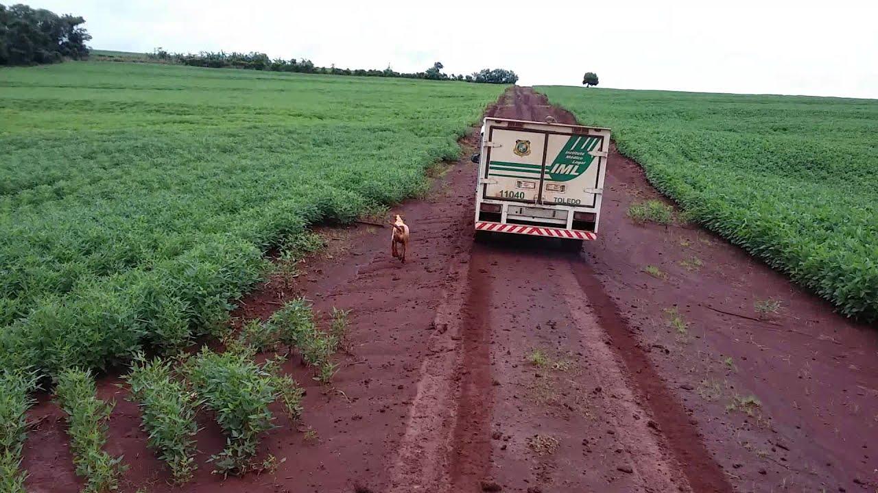 一匹の犬がトラックを16キロも追いかける理由。その理由に涙が止まらない…