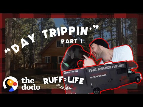 The Pack's Road Trip Gets Off to a Rocky Start | Ruff Life With Lee Asher