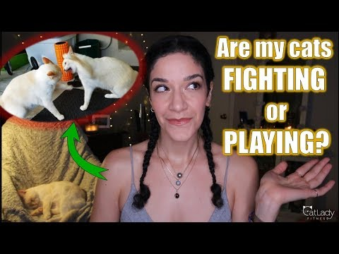 Are My Cats PLAYING Or FIGHTING? (How To Tell The Difference, Prevent Conflict & Break Up A Fight)