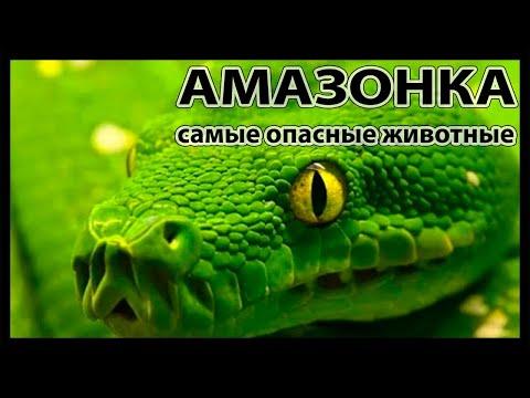 Самые опасные животные Амазонии National Geographic - Видео онлайн