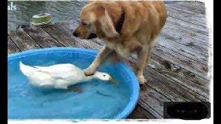 животные Смешные видео коллекции Домашние животные милые Собаки и кошки Забавные вещи
