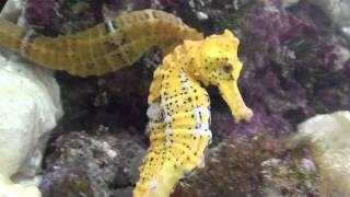 Seahorse ***