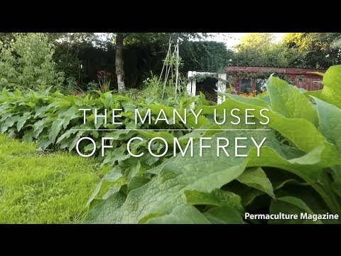 The Many Uses of Comfrey