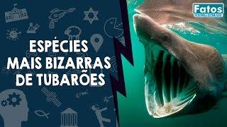 8 Espécies mais bizarras de Tubarões