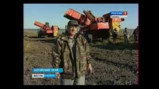 Алтайский фермер выращивает картофель в невиданных количествах!