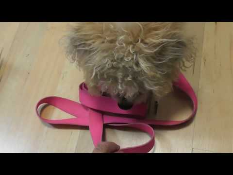 How to CLEAN Dog LEASH Dog Collar