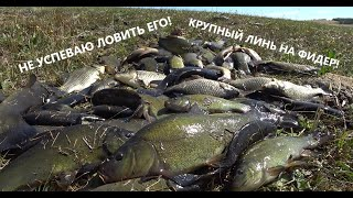 Этот пруд кишит линём Ловлю дуплетами Рыбалка на фидер Рыбалка 2021
