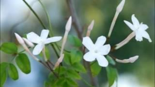 이승철- 말리꽃 (초고음질)