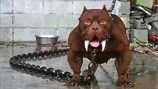 أخطر وأشرس كلب في العالم .. إذا رأيته اهرب على الفور وأنجُ بحياتك!!
