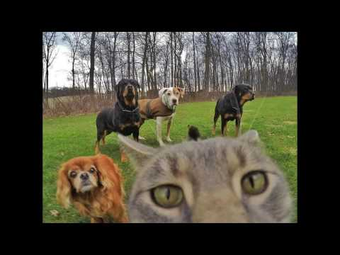 baby cats for sale |   maine coon cat breeders |selfiie cats |   himalayan kittens