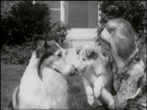 "Lassie - Episode #372 - ""High Water"" - Season 11, Ep 20 -  1/31/1965"