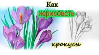 Уроки рисования. Как нарисовать цветы. Крокусы карандашом и акварелью(В этом уроки вы научитесь рисовать весенние цветы - крокусы.Рисуем крокусы карандашом и акварелью. ▻Скача..., 2015-03-15T15:23:14.000Z)