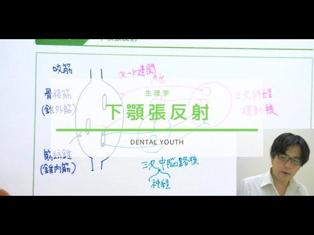 下顎張反射【歯科医師国家試験】