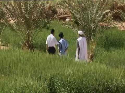 Mauritania: Return to the Oasis