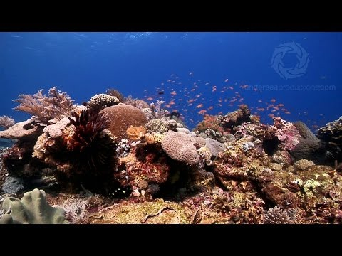 """Oceans"" scenes 1-6: Currents, Plankton, Reef Building Corals, Symbiotic Relationships."