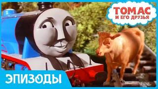 Томас и его друзья. Коровы на рельсах. Мультики про #ПаровозикТомас для детей