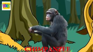 The Finger Family Song   Chimpanzee   English Nursery Rhymes For Kids