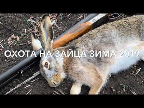 ОХОТА НА  ЗАЙЦА ЗИМОЙ  (1- Декабря 2019  ) Первая Зимняя Охота На Зайца-Русака  ХИТРЫЙ ЗАЯЦ