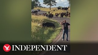 Bison pulls off woman's jeans in attack at US state park caught on video
