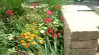 Chicago Perennial Garden Designs - Full Sun To Part Shade