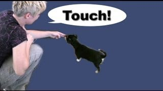 Tutorial: 'touch'- a must for any dog trainer!