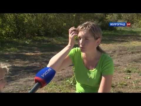новониколаевка фото область волгоградская