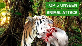 Top 5 UNSEEN Animal Attack 2018 | Most Amazing Moments Of Wild Animal Fights