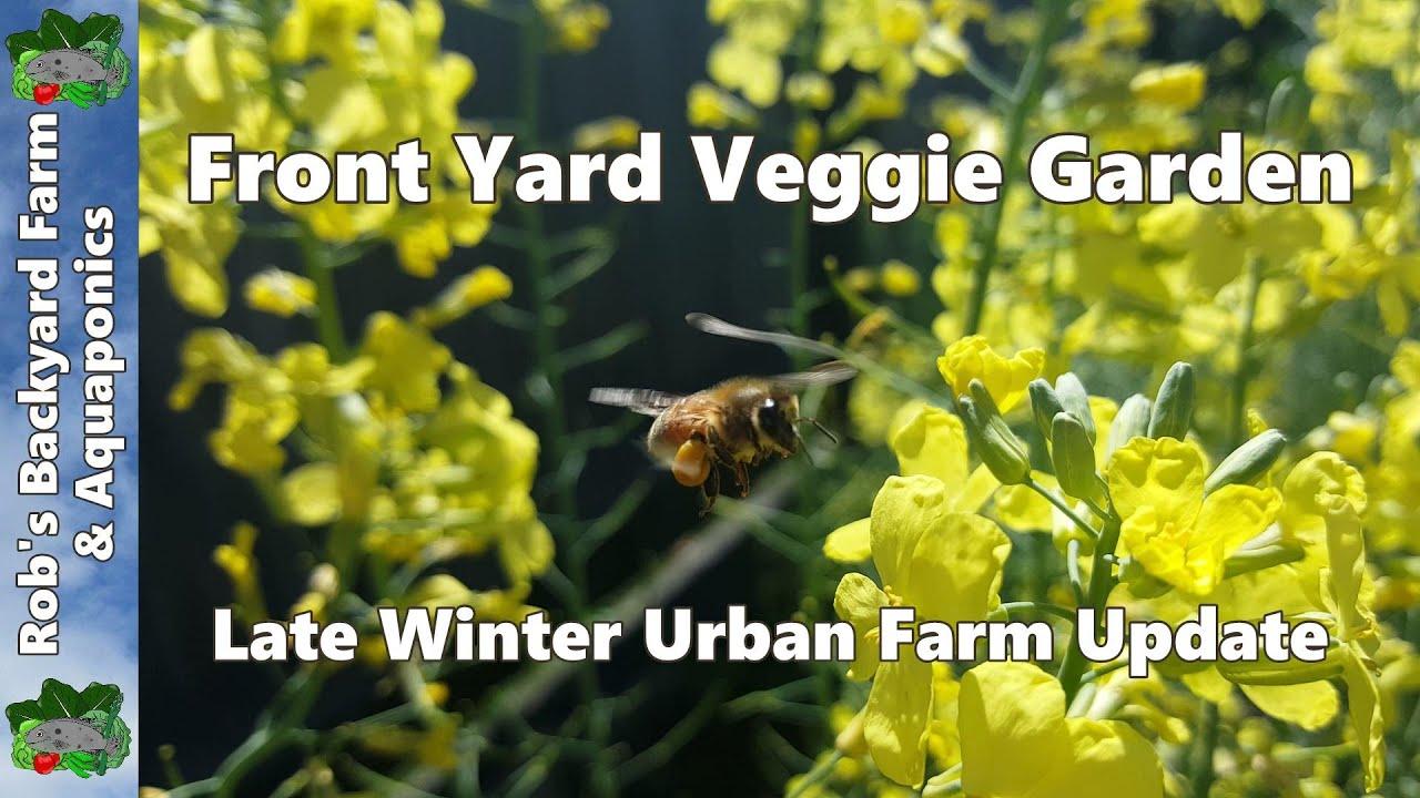front yard veggie garden late winter urban farm update youtube