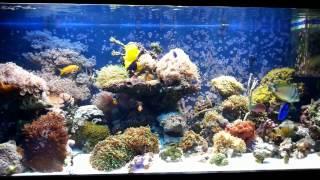 Морской аквариум - Коралловый риф для себя :)(Две минуты из жизни морского аквариума., 2013-12-15T18:39:14.000Z)