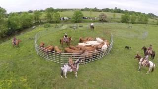 wsf: rassemblement et tri de bétail