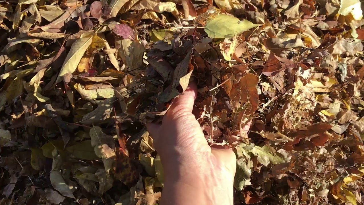 preparing your garden for winter with north end organic nursery