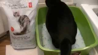 Best Cat Litter to buy! Silica Crystals Review! #catlitter