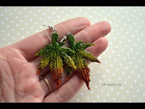 Конопля посевная - Cannabis sativa L.