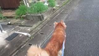 毎日、この猫にドッキリを仕掛けられるおバカな犬.