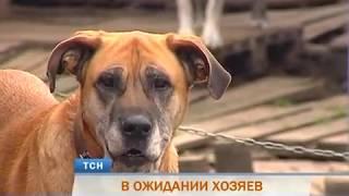 Собаки из пермского приюта ищут дом и любящих хозяев