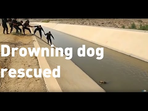 Man jumps into water to save drowning dog in Peru