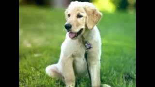 Фото милых собачек!