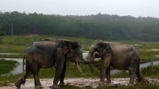 Story 11 - Sebenarnya mereka suka bermain hujan dan lumpur!!!