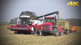 Тракторы К-424 Кирюша Т-150К МТЗ-82 и комбайн ACROS 595 Plus - оперативная работа в поле