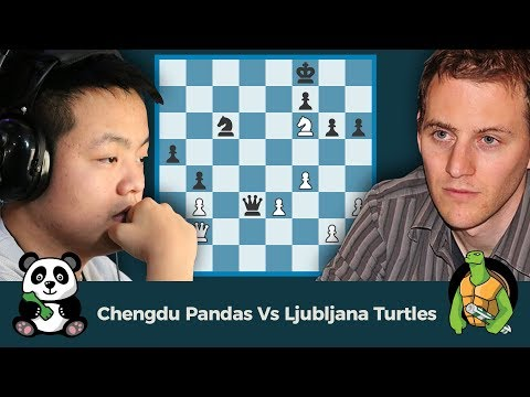 PRO Chess League Semifinals: Chengdu Pandas Vs Ljubljana Turtles