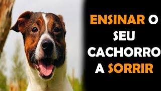 Como Ensinar um Cachorro a Sorrir - Como fazer um cão sorrir