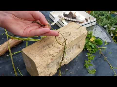 Traditional witchcraft: Making a witch's ladder with nettle cordage