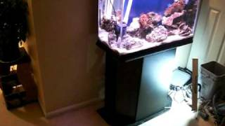 29g saltwater tank and diy 10g sump