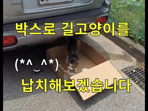 길고양이들도 박스로 납치? 를 할 수 있을까요(⌒_⌒;)